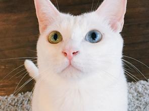 白玉ちゃん
